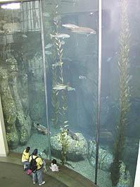 ロングビーチ水族館